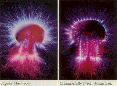 Organic-Mushroom