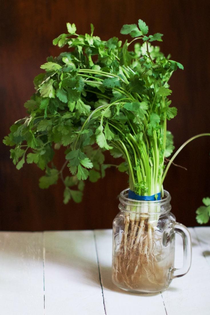Store Fresh Herbs Olivia Budgen Blog